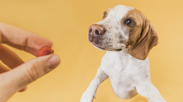 อาหารสุนัข พันธ์เล็ก